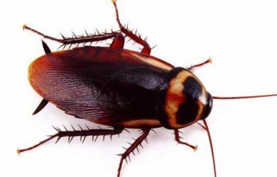 hamam böceğini evden kovmak