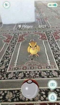 pidgey camide