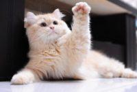 kedi patileri