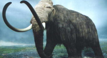 mamutlar