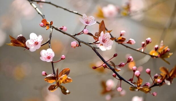 ilkbahar ekinoksu 21 mart