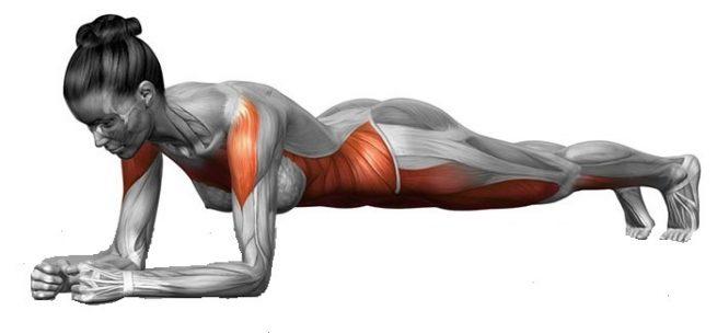 plank hareketinin çalıştırdığı kaslar