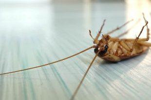 böcek ilaçlama