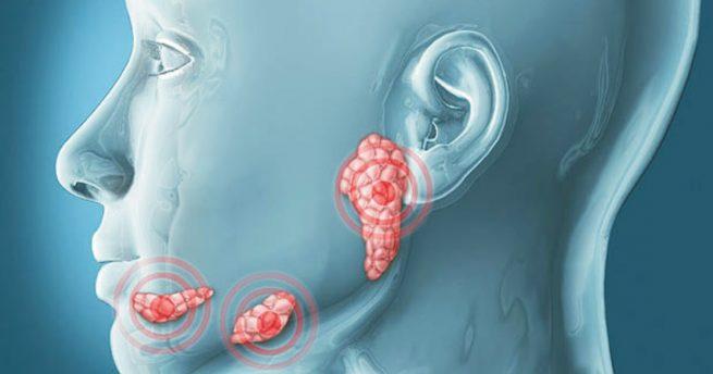 Tükürük bezleri tarafından salgılanan ptyalin enzimi
