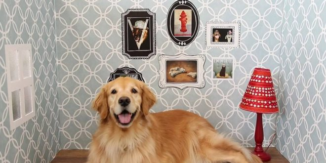 köpeği eve adapte etmek