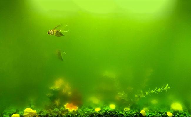 yeşil su yosunu